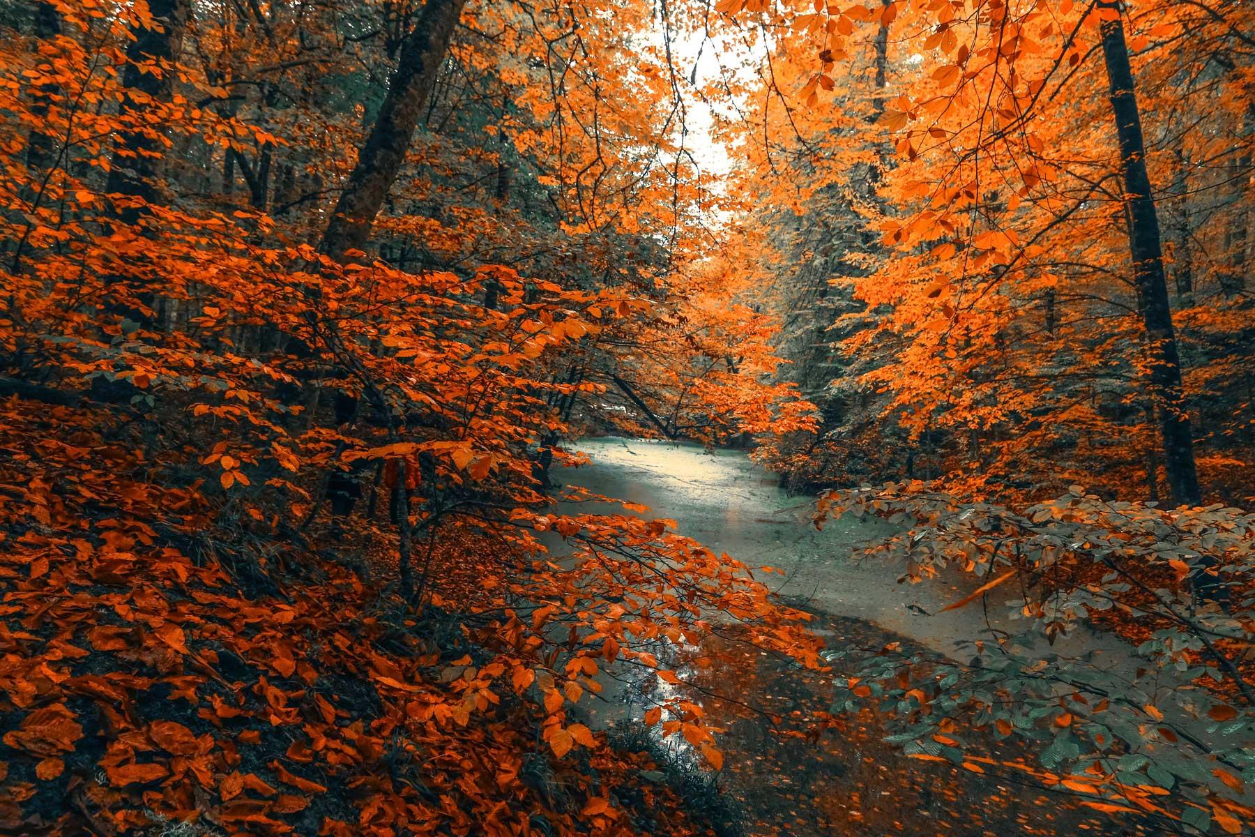 Fit-und-Gesund-durch-den-Herbst---LebensForm